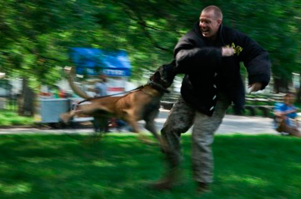 Un policía mató a un perro callejero y generó repudio