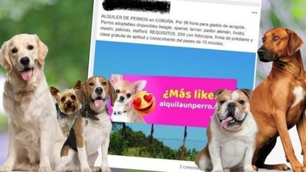 perros coronavirus, perros estado alarma