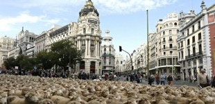 Después de los 'indepes', miles de ovejas invaden Madrid